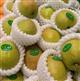 发泡网套挤出机组可用于水果蔬菜